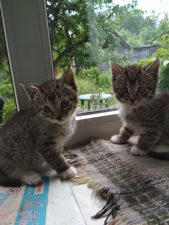 Котята полосатики в добрые руки